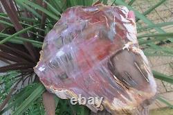 Petrified Wood Fossilised Slice plate slab semi Polished Madagascan Fossil 1.6 k
